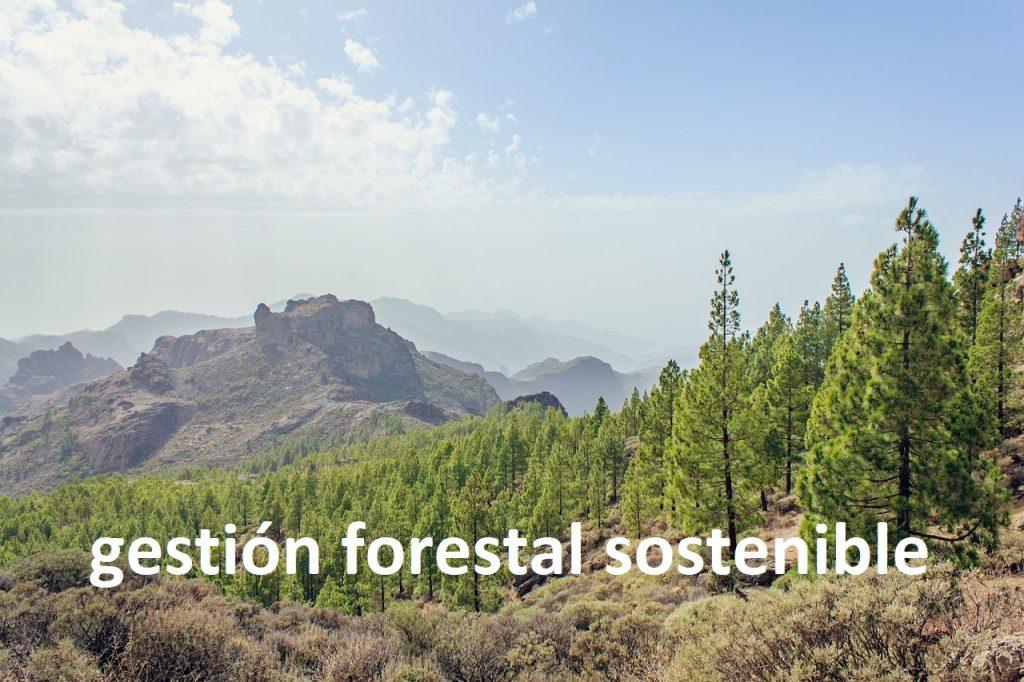 abogados gestión forestal